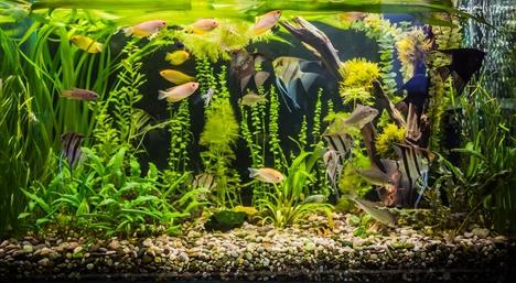 Voda dlja ryb