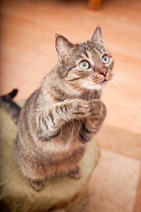 фото беспородные кошки