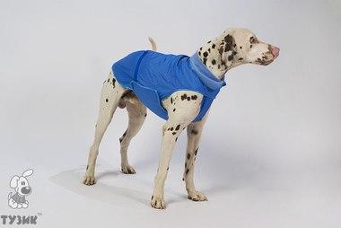 Одежда для собак тузик купить в москве